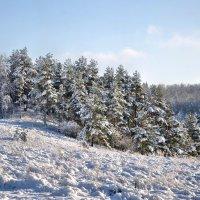 зимний лес :: Александр Сергеев