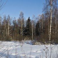 Зимний лес :: Анатолий Макин