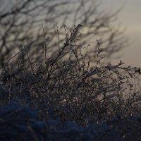 Зимний этюд :: Андрей Lyz