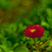 Весна :: Mikhail Arhangel