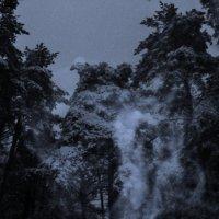 Зимним морозным вечером в лесу. :: Ольга Кривых