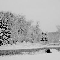 Парковая зона в лесном массиве Кузьминки. :: Ольга Кривых