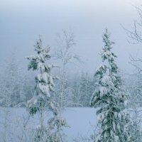 В морозной дымке. :: Алексей Хаустов