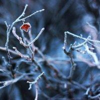 Мороз :: Ксения Мяу
