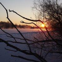утром 18 января :: svetlana