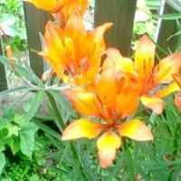 """Бабушкины цветы"" :: Карина Серая"