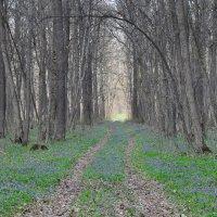 Ранняя весна :: Валентина Белоусова