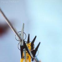 Мгновения зимы :: Евгения Чулкова