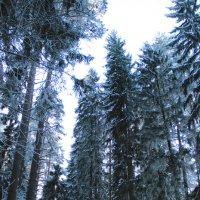 Лес :: Ксения Зименская