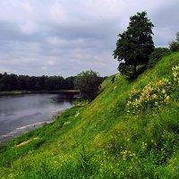 Берег реки Луга :: Олег .