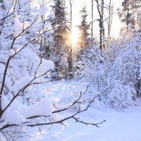 Морозное утро :: Евгения Беденко