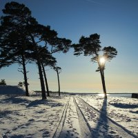 Зима. :: Igor Shoshin