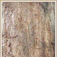 старое дерево :: Михаил Николаев