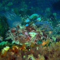 Король рифа :: Boris Khershberg