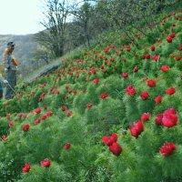 Май в Крымских горах :: Владимир Клюев
