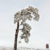Уединение среди снегов :: Евгений Никифоров