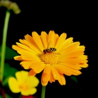 желто-черное... :: Марат Шарипов