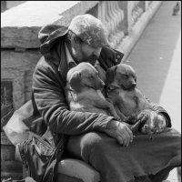 Собаки на Сене :: Максим Трухан