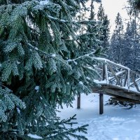 Морозный январь :: Наталья Rosenwasser