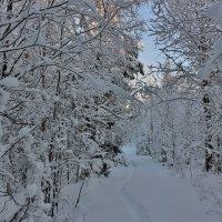 В зимнем лесу :: ирина )))