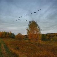 Осень :: Nikita Volkov