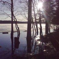 Озеро Лебединое.Весна. :: Игорь