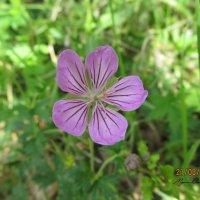 Нежный цветок :: Мэрин Дюбо