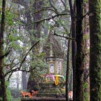 Таиланд. На вершине самой высокой горы Интанон, 2565 м :: Владимир Шибинский