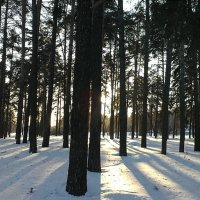 Просто лес :: Мария Феникс
