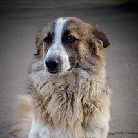 Одинокая собака :: Макс Поперечный