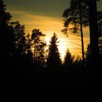 Закат в зимнем лесу.. :: Вячеслав Макаров