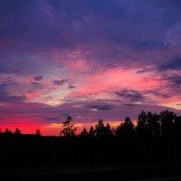 закат в лесу :: Евгения ***