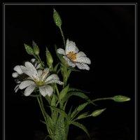 Майские цветы :: Nikita Volkov