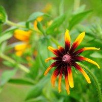 Цветок :: Андрей Куприянов