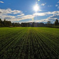 Осенние посевы :: Андрей Куприянов