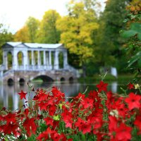 Краски уходящего лета :: Полина Polli