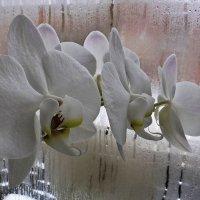 Орхидея :: Андрей Дворников