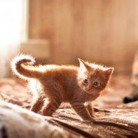 Sunny cat :: Наталия Молдованова