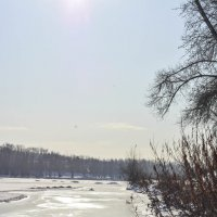Зимние зайчики :: юрий Амосов