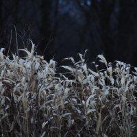 ветер :: Дарья Сашина