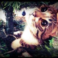 мой кот :: Natasha Zuj