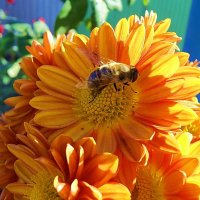 Цветок  и пчела :: Юрий Владимирович