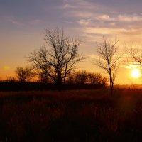 Цвета и свет осеннего заката :: Aine Lin