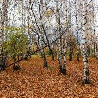 Ковер из осенних листьев :: Ольга Чазова