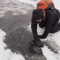Осторожнее на льду! :: Юрий Лузик