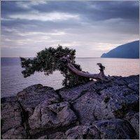 Дико на юге :: Валерий Шейкин