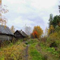 Осень в деревне :: Наталья Ерёменко