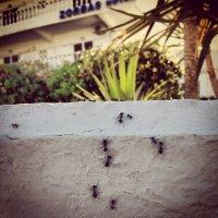 Ants :: Роман Сидоровъ