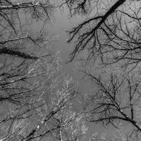 в небо :: Sergey Bagach