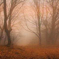 Розовый туман :: Михаил Баевский